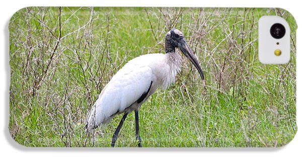 Wood Stork In The Marsh IPhone 5c Case by Carol Groenen