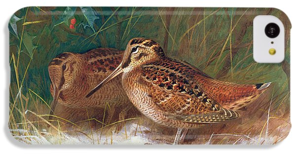 Woodcock In The Undergrowth IPhone 5c Case by Archibald Thorburn