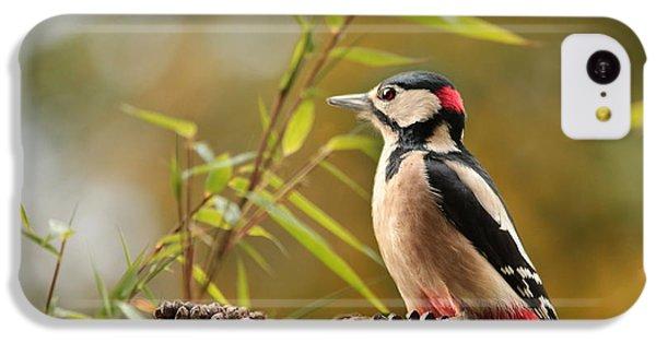 Woodpecker 3 IPhone 5c Case by Heike Hultsch