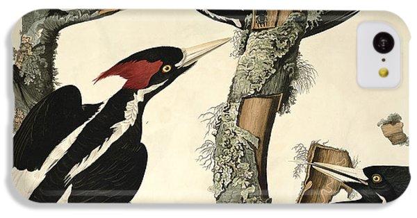 Woodpecker iPhone 5c Case - Woodpecker by John James Audubon