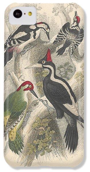 Woodpeckers IPhone 5c Case by Anton Oreshkin