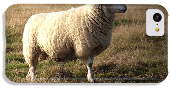 Sheep iPhone 5c Case - Woolly Coat by Sharon Lisa Clarke