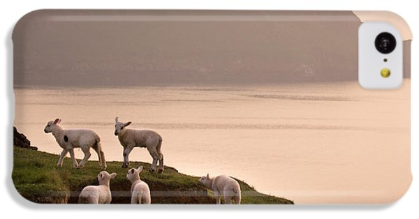Sheep iPhone 5c Case - Worms Head by Angel Ciesniarska