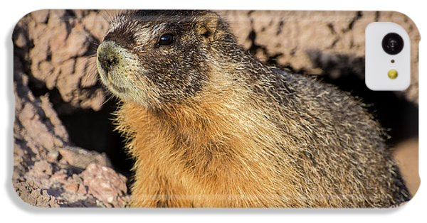 Yellow-bellied Marmot - Capitol Reef National Park IPhone 5c Case by Gary Whitton