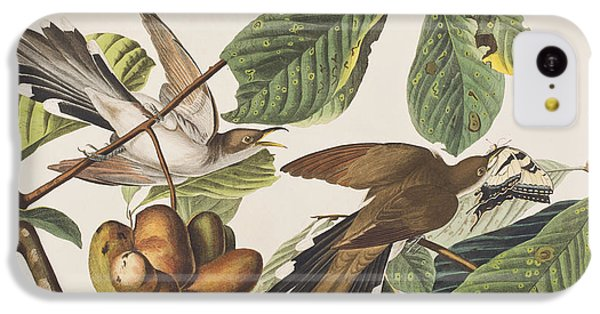 Cuckoo iPhone 5c Case - Yellow Billed Cuckoo by John James Audubon