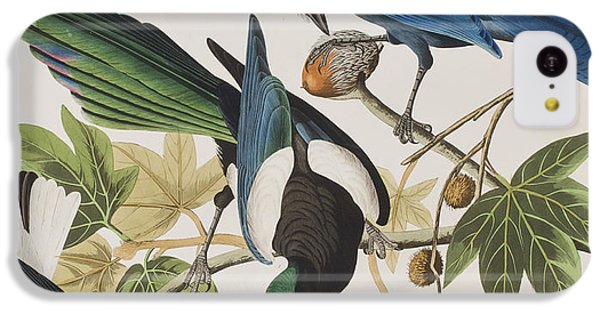 Magpies iPhone 5c Case - Yellow-billed Magpie Stellers Jay Ultramarine Jay Clark's Crow by John James Audubon