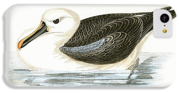 Yellow Nosed Albatross IPhone 5c Case