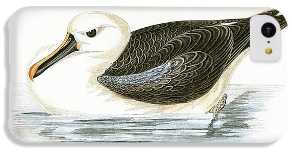 Yellow Nosed Albatross IPhone 5c Case by English School