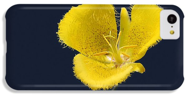 Yellow Star Tulip - Calochortus Monophyllus IPhone 5c Case by Christine Till