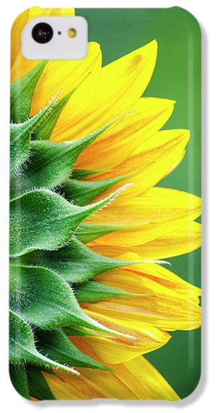 Yellow Sunflower IPhone 5c Case by Christina Rollo