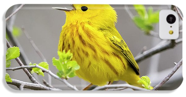 Yellow Warbler  IPhone 5c Case