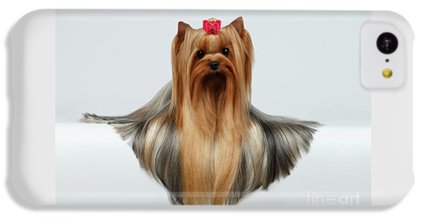 Yorkshire Terrier Dog With Long Groomed Hair Lying On White  IPhone 5c Case by Sergey Taran