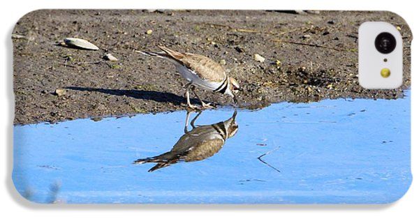 Killdeer iPhone 5c Case - You Look Familiar  by Karen Silvestri