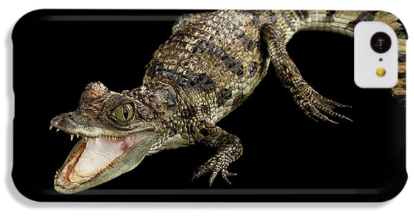 Young Cayman Crocodile, Reptile With Opened Mouth And Waved Tail Isolated On Black Background In Top IPhone 5c Case by Sergey Taran