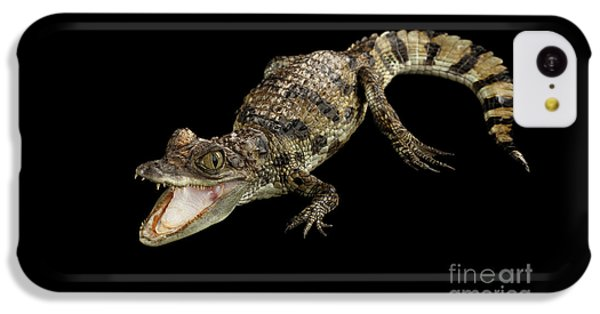 Young Cayman Crocodile, Reptile With Opened Mouth And Waved Tail Isolated On Black Background In Top IPhone 5c Case