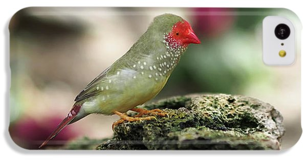 Young Star Finch IPhone 5c Case