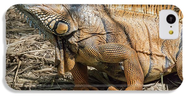 Belize iPhone 5c Case - Male Green Iguana, In Breeding Plumage by William Sutton