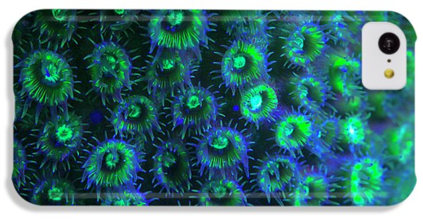 Belize iPhone 5c Case - Night Dive At Barrier Reef Near Saint by Stuart Westmorland