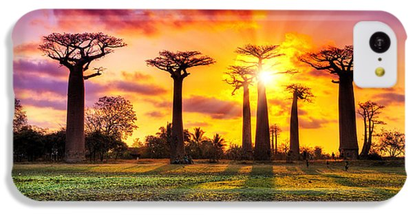 Beautiful Sunrise iPhone 5c Case - Beautiful Baobab Trees At Sunset At The by Dennis Van De Water