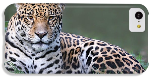 Belize iPhone 5c Case - Close-up View Of A Jaguar Panthera Onca by Henner Damke