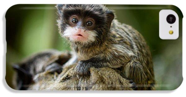 South America iPhone 5c Case - Cute Baby Emperor Tamarin Saguinus by Eric Gevaert
