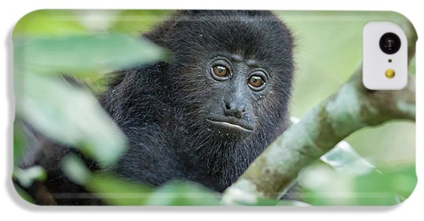 Belize iPhone 5c Case - Juvenile Black Howler Monkey, Community by William Sutton
