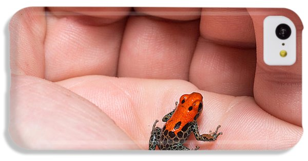 South America iPhone 5c Case - Red-backed Poison Frog, Ranitomeya by Christian Vinces