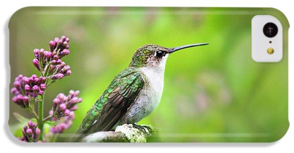 Humming Bird iPhone 5c Case - Spring Beauty Ruby Throat Hummingbird by Christina Rollo