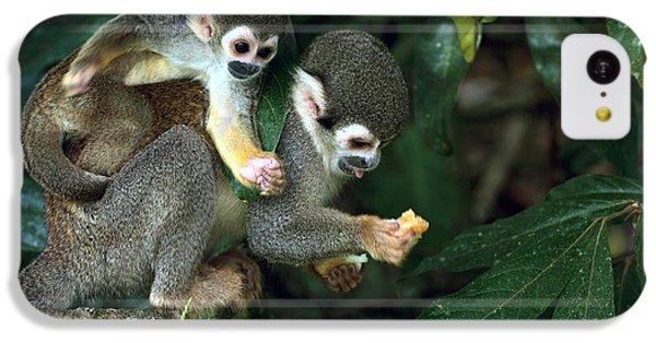South America iPhone 5c Case - Squirrel Monkey In Amazon Rainforest by Ksenia Ragozina