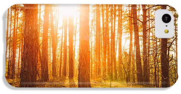 Beautiful Sunrise iPhone 5c Case - Sunset Sunrise In Atumn Coniferous by Grisha Bruev