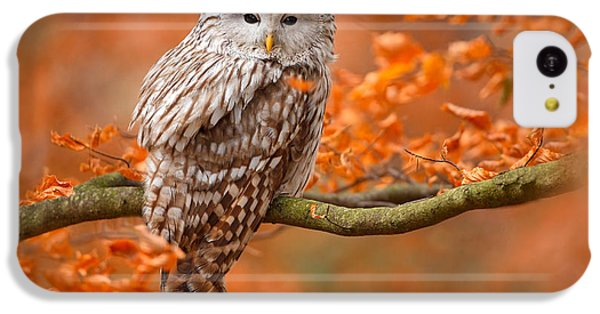 Small iPhone 5c Case - Ural Owl, Strix Uralensis, Sitting On by Ondrej Prosicky