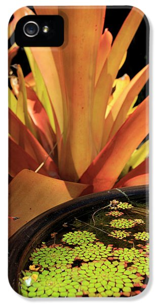 Far North Queensland iPhone 5s Case - A Pot Plant Display In The Cairns by Paul Dymond