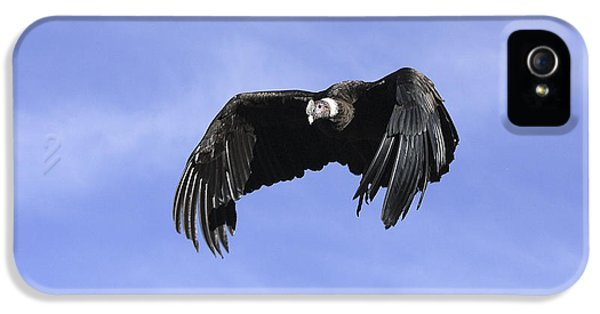 Andean Condor IPhone 5s Case