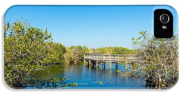 Anhinga iPhone 5s Case - Anhinga Trail Boardwalk, Everglades by Panoramic Images