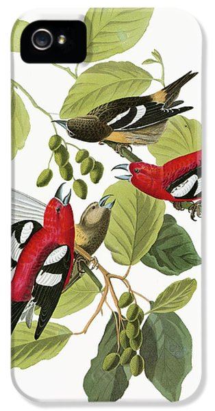 Crossbill iPhone 5s Case - Audubon Crossbill by Granger