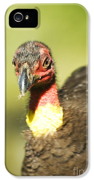 Brush Scrub Turkey IPhone 5s Case by Jorgo Photography - Wall Art Gallery