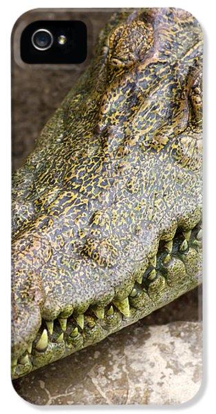 Crocodile iPhone 5s Case - Crocodile by Jorgo Photography - Wall Art Gallery