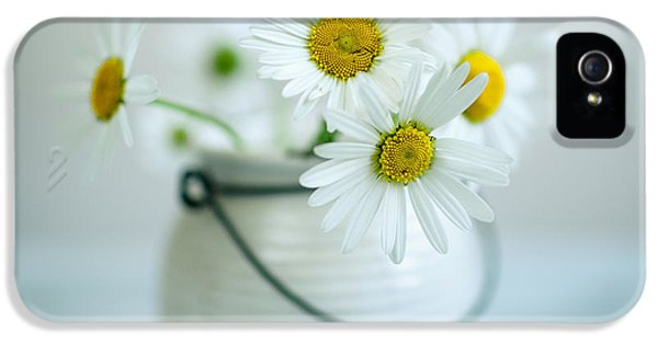 Daisy iPhone 5s Case - Daisy Flowers by Nailia Schwarz