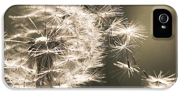 IPhone 5s Case featuring the photograph Dandelion by Yulia Kazansky