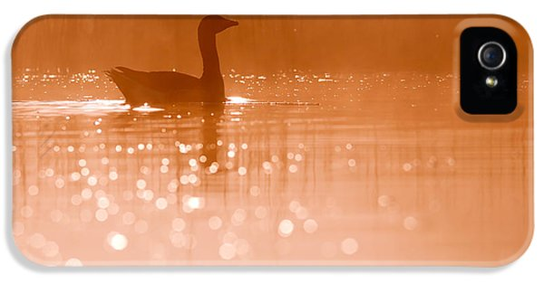 Duck iPhone 5s Case - Early Morning Magic by Roeselien Raimond