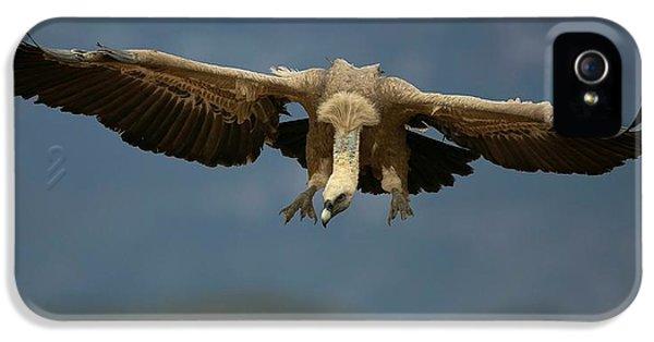 Griffon iPhone 5s Case - Griffon Vulture Flying by Nicolas Reusens