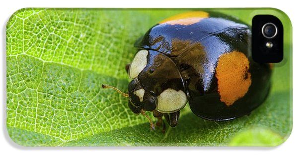 Harlequin Ladybird IPhone 5s Case by Heath Mcdonald