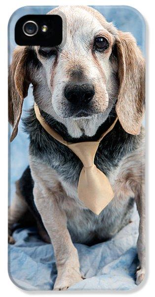 Dog iPhone 5s Case - Kippy Beagle Senior by Iris Richardson
