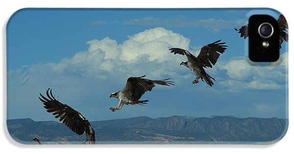Landing Pattern Of The Osprey IPhone 5s Case by Ernie Echols
