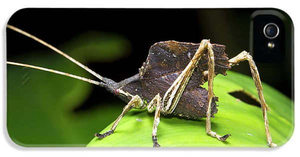 Leaf Mimic Bush-cricket IPhone 5s Case by Dr Morley Read