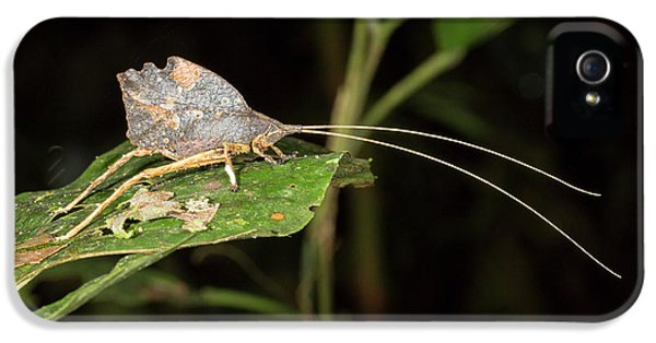 Leaf Mimic Katydid IPhone 5s Case by Dr Morley Read