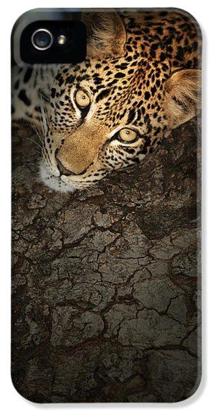 Leopard iPhone 5s Case - Leopard Portrait by Johan Swanepoel