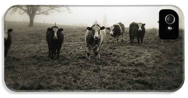 Cow iPhone 5s Case - Livestock by Les Cunliffe