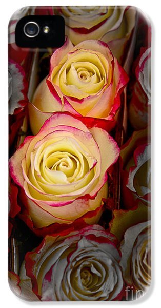 Love Is A Rose IPhone 5s Case by Al Bourassa