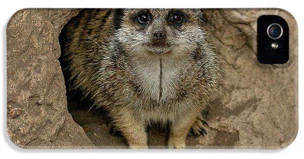 Meerkat IPhone 5s Case by Ernie Echols